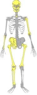 05bis_En amarillo, las partes de esqueleto recuperadas